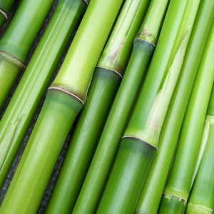 bamboo-240321